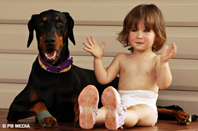 A-Doberman-Pincher-named-Khan-saves-baby-from-deadly-snake-attack 4