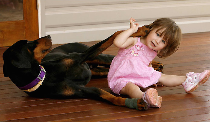 A-Doberman-Pincher-named-Khan-saves-baby-from-deadly-snake-attack