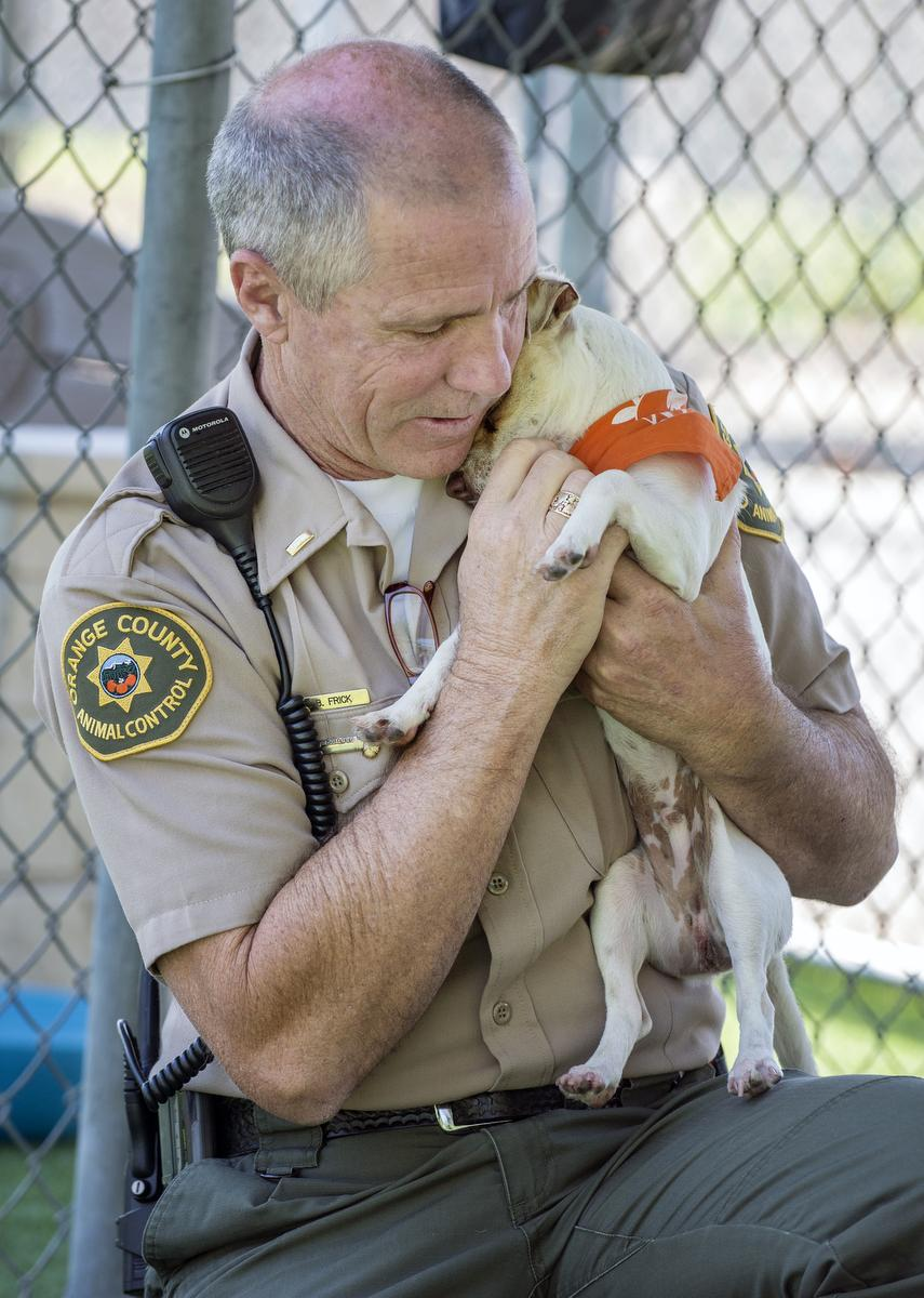 Lt. Brian Frick of Orange County Animal Control holds Bubba at the Orange County Animal Care in Orange on Wednesday morning. Frick was the officer that responded to the call in Tustin when illegal narcotics were found. He brought the dog to the Orange County Animal Care in Orange. Now healthy, Bubba went up for adoption Wednesday morning. ///ADDITIONAL INFORMATION: Slug: bubba.072016, Day: Wednesday, July 20, 2016 (7/20/16), Time: 10:08:24 AM, Location:  Orange, California -  - MARK RIGHTMIRE, THE ORANGE COUNTY REGISTER