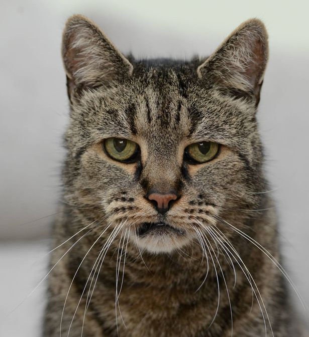 pay-nutmeg-the-worlds-oldest-cat2