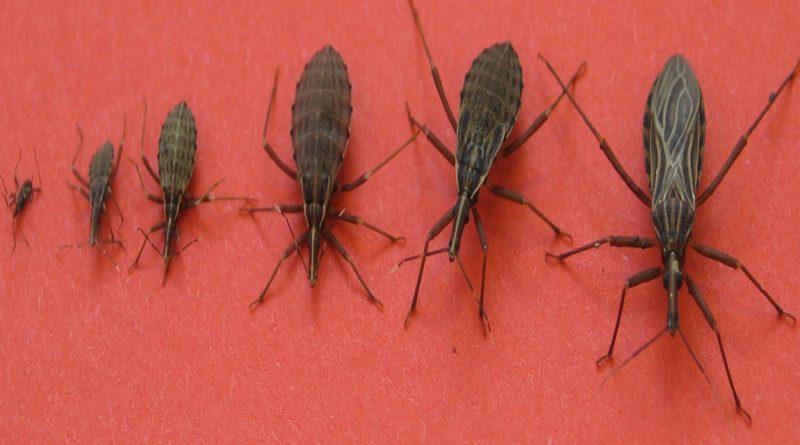 Attention si vous rencontrez cet insecte dans votre - Insecte dans les maisons ...